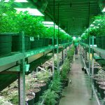 10 Tips On How To Get Into The Medical Marijuana Industry (From Budtenders To Business Ownership)