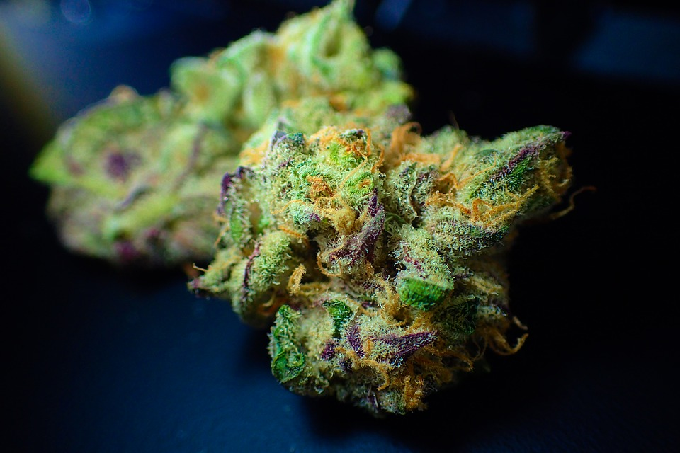 These-Are-the-States-With-the-Most-Cannabis-Dispensaries